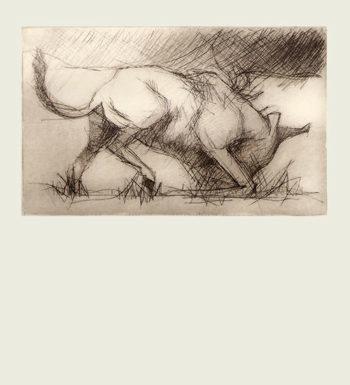 «Toro» Grabado A Punta Seca