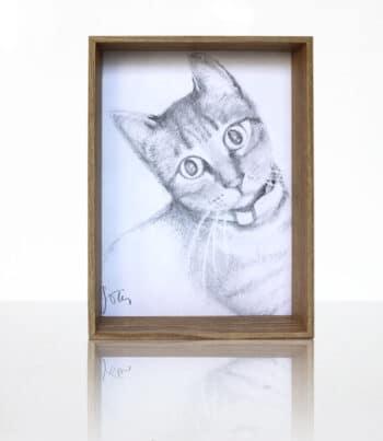 Dibujo A Lápiz, Retrato De Gato