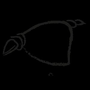 Nudos para furoshiki